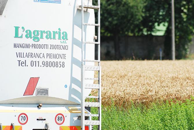 Raccolta grano - Farina ViVa